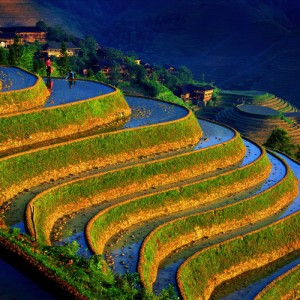 The Longji Rice Terraces 02