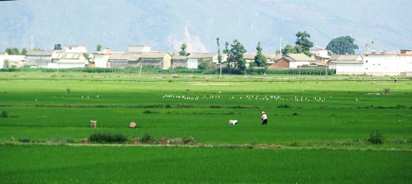 Xizhou Bai ethnic