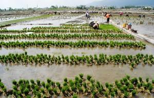 bai agriculture