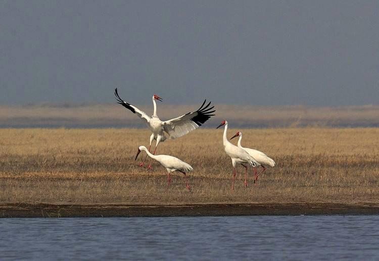 Lake Poyang03